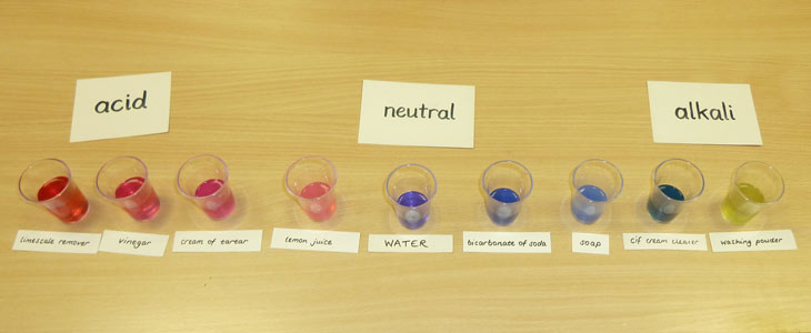 Science Club An Acid Base Indicator Using Red Cabbage